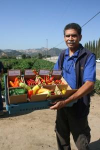 Santa Clara County Peppers 077