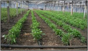 drip irrigation pic